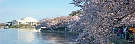 National Cherry Blossom Festival Www Culturaltourism Org